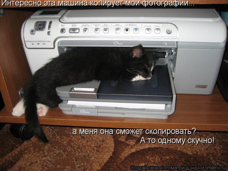 Котоматрица: Интересно эта машина копирует мои фотографии... а меня она сможет скопировать? А то одному скучно!