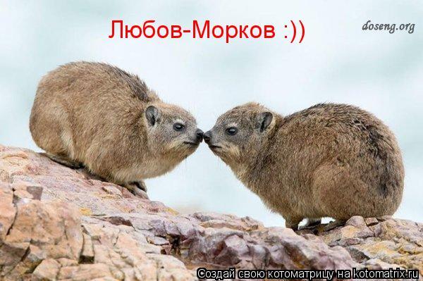 Котоматрица: Любов-Морков :))
