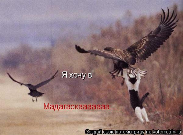 Котоматрица: Я хочу в Мадагаскааааааа......