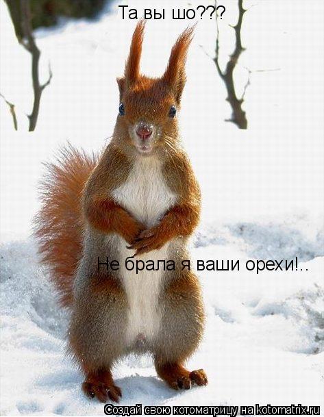 Котоматрица: Та вы шо??? Не брала я ваши орехи!..