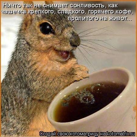 Котоматрица: Ничто так не снимает сонливость, как чашечка крепкого, сладкого, горячего кофе, пролитого на живот...