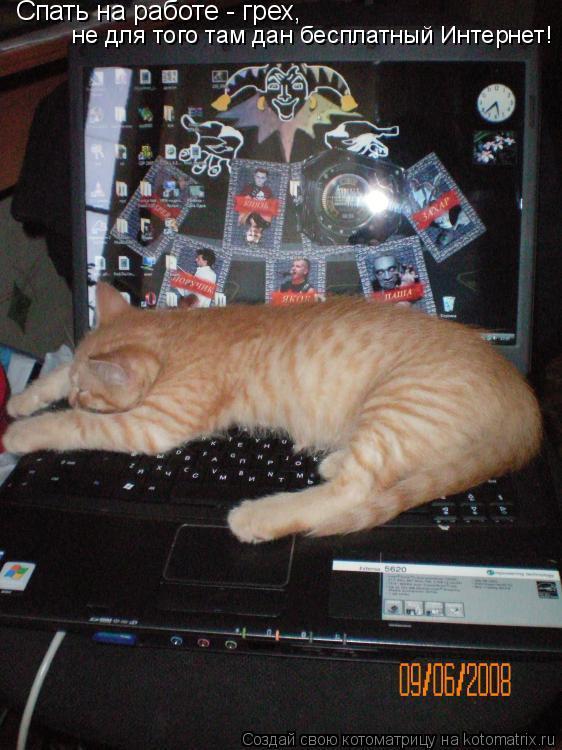 Котоматрица: Спать на работе - грех, не для того там дан бесплатный Интернет!
