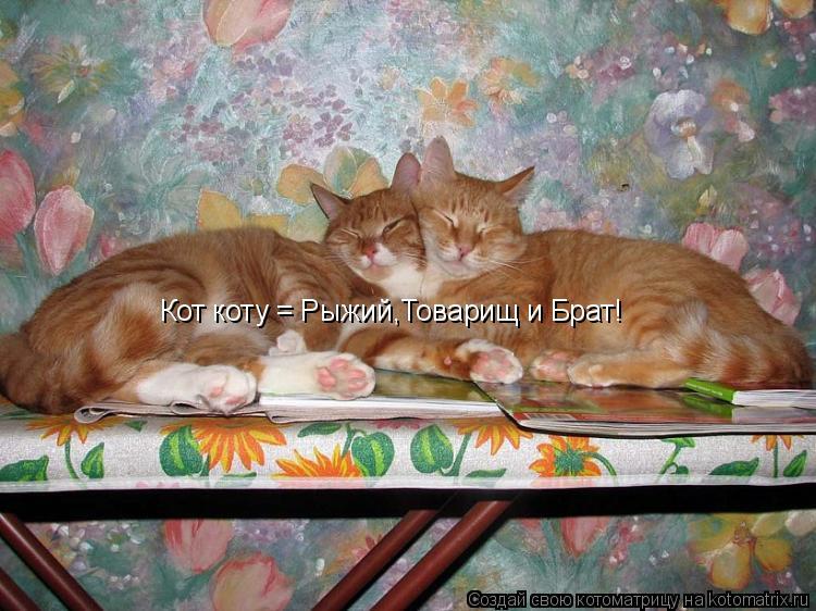 Котоматрица: Кот коту = Рыжий,Товарищ и Брат!