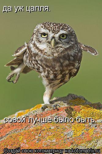 Котоматрица: да уж цапля. совой лучше было быть.