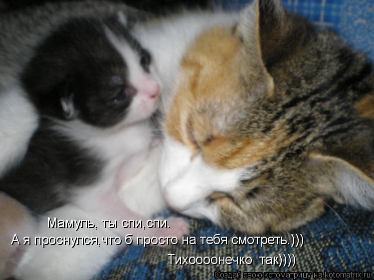Котоматрица: Мамуль, ты спи,спи. А я проснулся,что б просто на тебя смотреть.))) Тихоооонечко  так))))