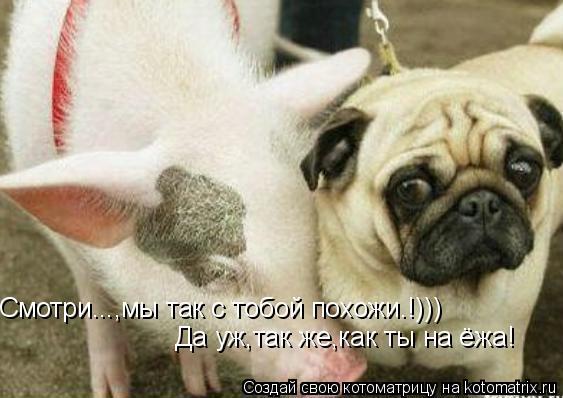 Котоматрица: Смотри...,мы так с тобой похожи.!))) Да уж,так же,как ты на ёжа!