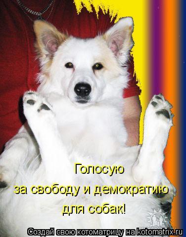 Котоматрица: Голосую  за свободу и демократию для собак!