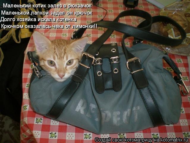 Котоматрица: Маленький котик залез в рюкзачок Маленькой лапкой задел он крючок Долго хозяйка искала котенка Крючком оказалась чека от лимонки!!