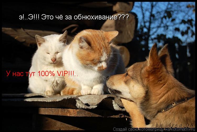 Котоматрица: э!..Э!!! Это чё за обнюхивание??? У нас тут 100% VIP!!!..