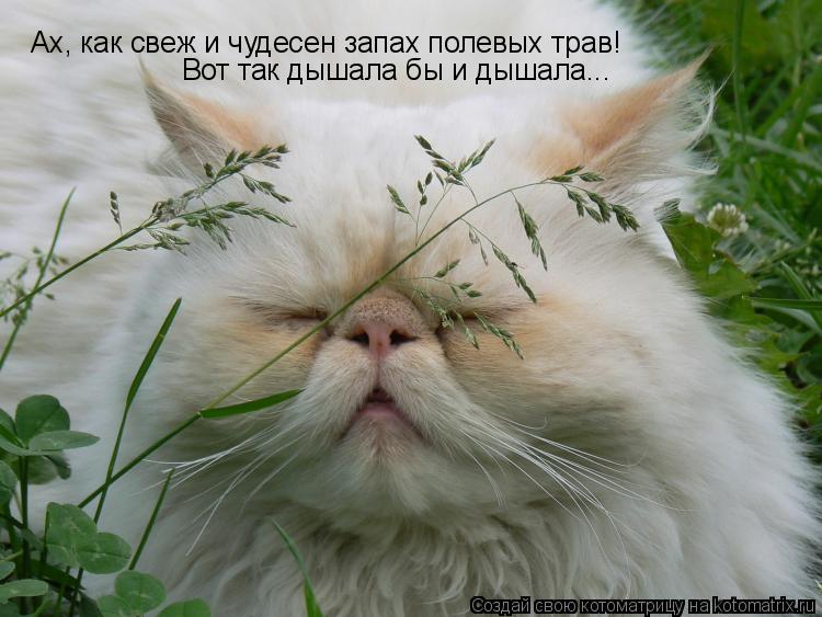 Котоматрица: Ах, как свеж и чудесен запах полевых трав! Вот так дышала бы и дышала...
