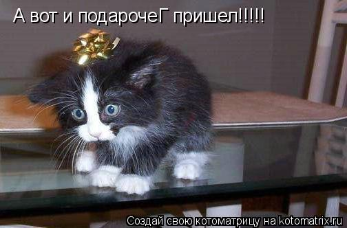 Котоматрица: А вот и подарочеГ пришел!!!!!