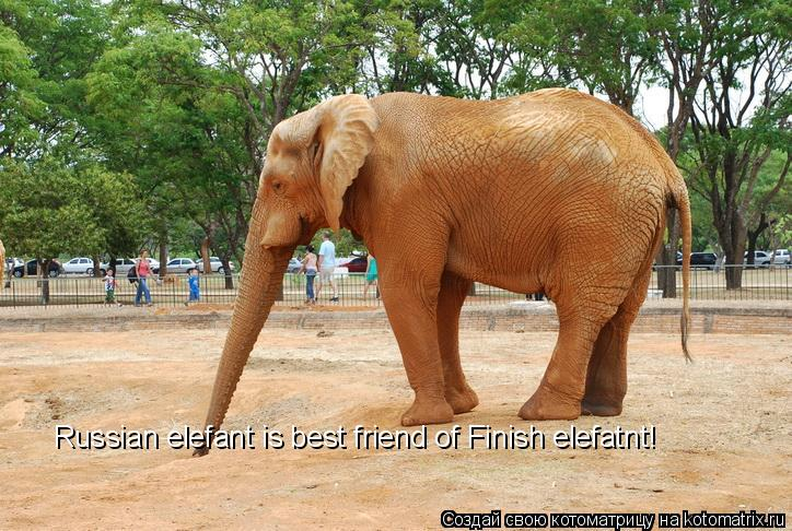 Котоматрица: Russian elefant is best friend of Finish elefatnt!