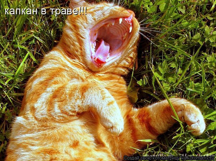 Котоматрица: капкан в траве!!!