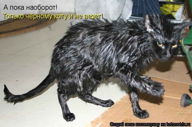 Котоматрица: А пока наоборот! Только черному коту и не везет!