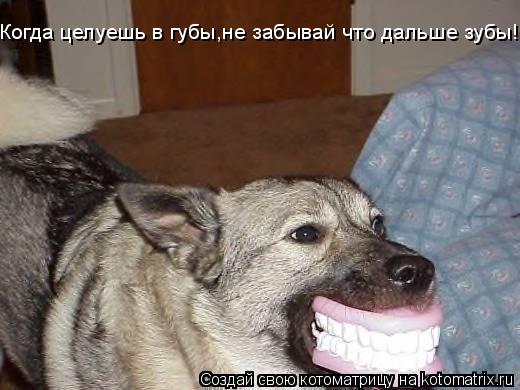 Котоматрица: Когда целуешь в губы,не забывай что дальше зубы!