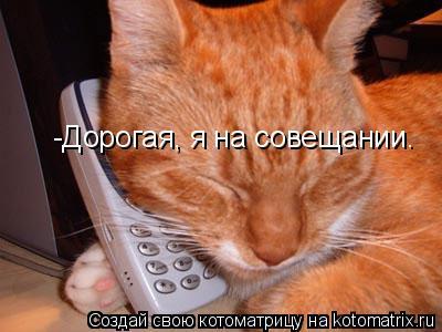 Котоматрица: -Дорогая, я на совещании.