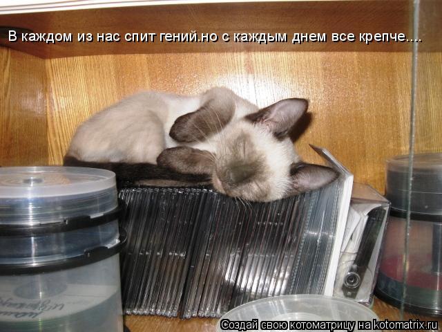 Котоматрица: В каждом из нас спит гений.но с каждым днем все крепче....