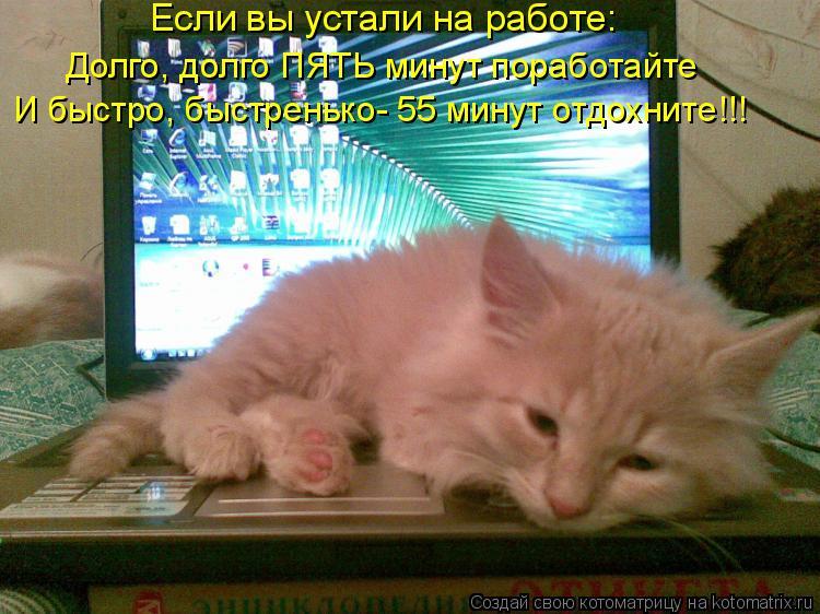 Котоматрица: Если вы устали на работе: Долго, долго ПЯТЬ минут поработайте И быстро, быстренько- 55 минут отдохните!!!