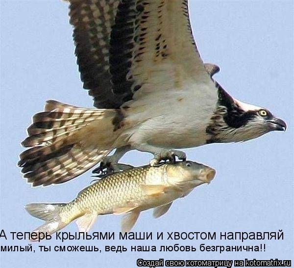 Котоматрица: А теперь крыльями маши и хвостом направляй милый, ты сможешь, ведь наша любовь безгранична!!