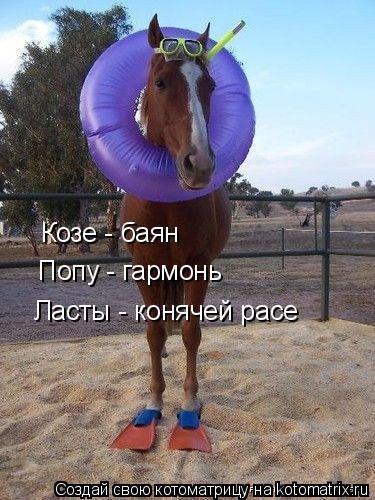 Котоматрица: Козе - баян Попу - гармонь Ласты - конячей расе