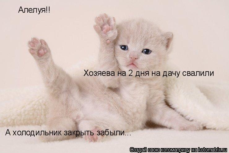 Котоматрица: Алелуя!! Хозяева на 2 дня на дачу свалили  А холодильник закрыть забыли...