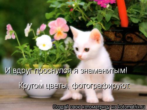 Котоматрица: И вдруг проснулся я знаменитым! Кругом цветы, фотографируют.