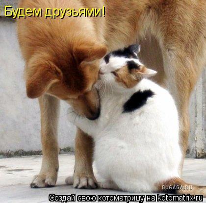 Котоматрица: Будем друзьями!