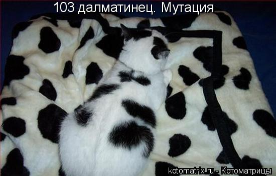 Котоматрица: 103 далматинец. Мутация