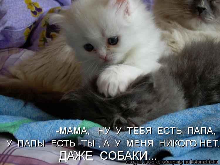 Котоматрица: -МАМА,   НУ  У  ТЕБЯ  ЕСТЬ  ПАПА, У  ПАПЫ  ЕСТЬ -ТЫ , А  У  МЕНЯ  НИКОГО НЕТ..., ДАЖЕ  СОБАКИ...