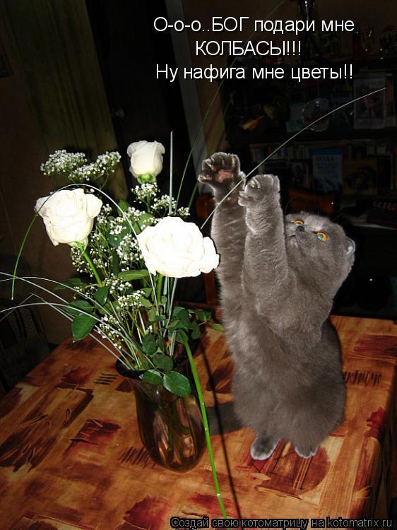 Котоматрица: О-о-о..БОГ подари мне  КОЛБАСЫ!!! Ну нафига мне цветы!!