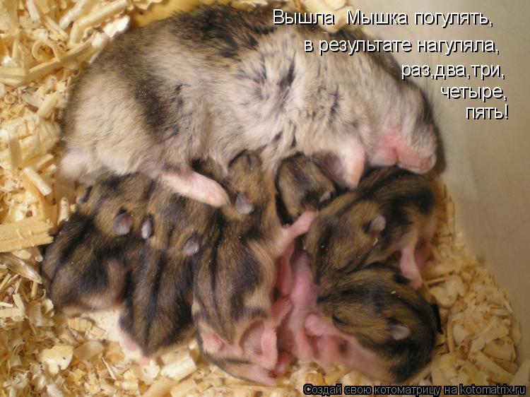 Котоматрица: Вышла  Мышка погулять, в результате нагуляла, раз,два,три, четыре, пять!