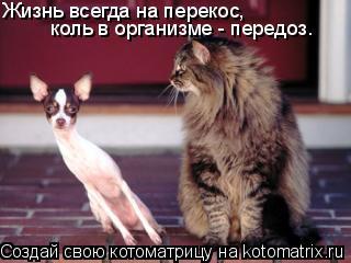 Котоматрица: Жизнь всегда на перекос, коль в организме - передоз.