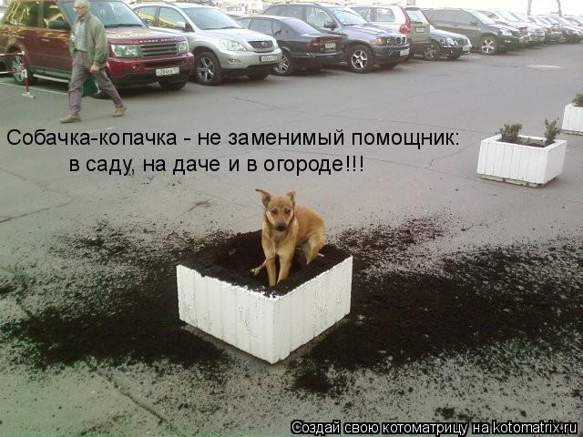 Котоматрица: Собачка-копачка - не заменимый помощник:  в саду, на даче и в огороде!!!