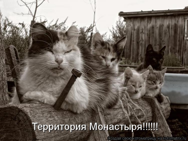 Котоматрица: Территория Монастыря!!!!!!