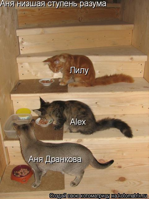 Котоматрица: Аня Дранкова Лилу Аня низшая ступень разума Аlex