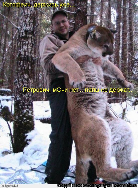 Котоматрица: Котофеич, держись уже... Петрович, мОчи нет... лапы не держат..