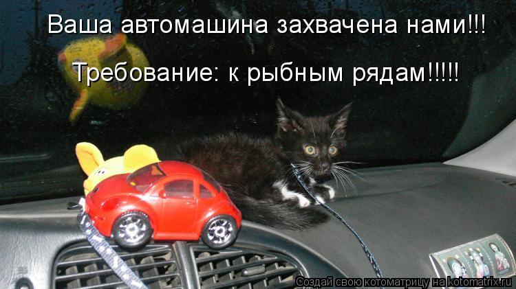 Котоматрица: Ваша автомашина захвачена нами!!! Требование: к рыбным рядам!!!!!