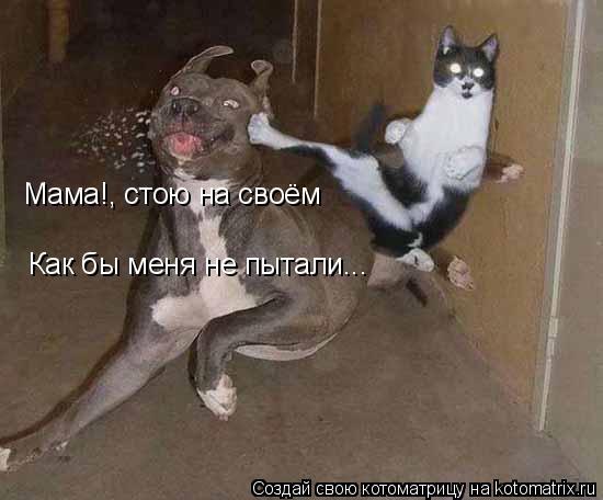 Котоматрица: Мама!, стою на своём Как бы меня не пытали...