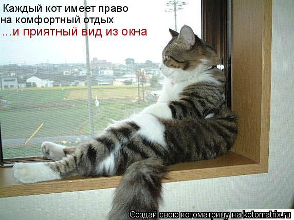 Котоматрица: Каждый кот имеет право на комфортный отдых ...и приятный вид из окна