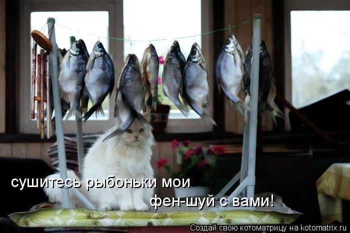Котоматрица: сушитесь рыбоньки мои фен-шуй с вами!