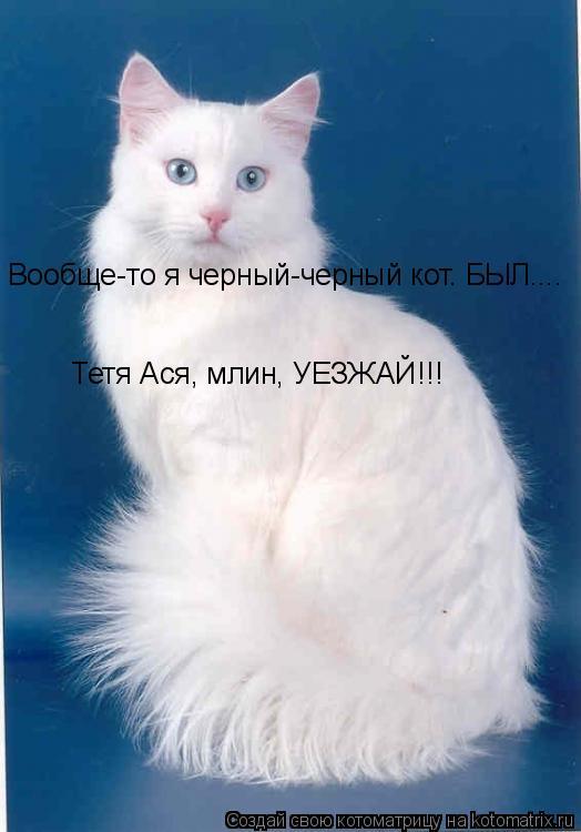 Котоматрица: Тетя Ася, млин, УЕЗЖАЙ!!!  Вообще-то я черный-черный кот. БЫЛ....