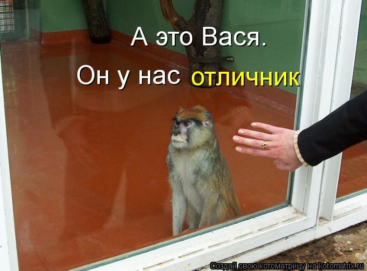 Котоматрица: А это Вася. Он у нас отличник