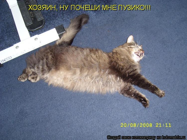Котоматрица: ХОЗЯИН, НУ ПОЧЕШИ МНЕ ПУЗИКО!!!