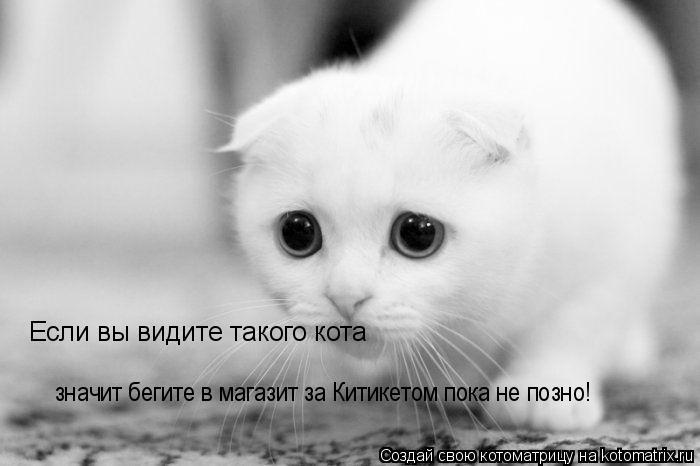 Котоматрица: Если вы видите такого кота значит бегите в магазит за Китикетом пока не позно!