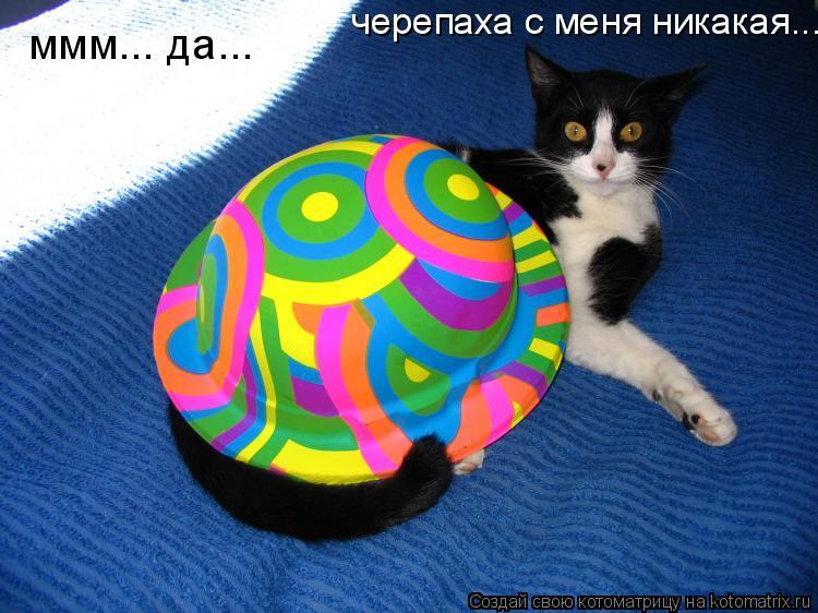 Котоматрица: ммм... да...   черепаха с меня никакая...