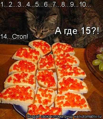 Котоматрица: 1...2...3...4...5...6...7...8...9...10... 14...Стоп! А где 15?!