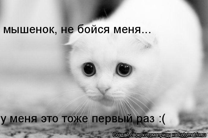 Котоматрица: мышенок, не бойся меня... у меня это тоже первый раз :(