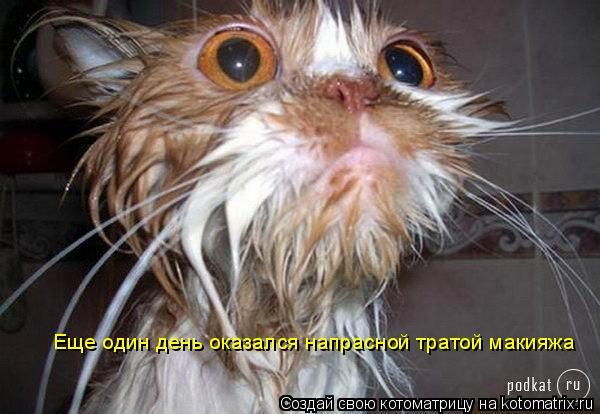 Котоматрица: Еще один день оказался напрасной тратой макияжа