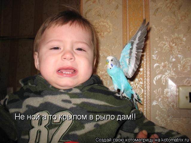 Котоматрица: Не ной а то крылом в рыло дам!!