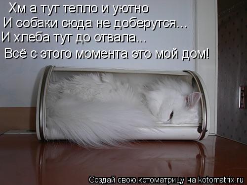 Котоматрица: Хм а тут тепло и уютно  И собаки сюда не доберутся... И хлеба тут до отвала... Всё с этого момента это мой дом!